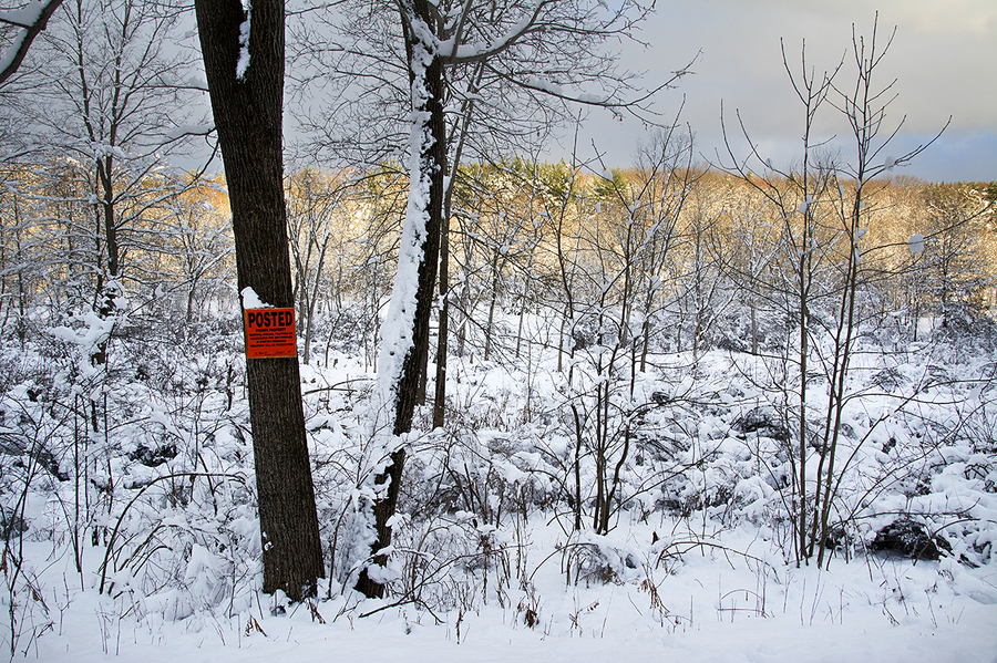 Posted Trees in Snow; County Route 22 : Rural Impressions : Diane Smook Photography: Nature, Dance, Documentary