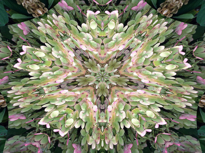 Hydrangea 2 : Kaleidoscopes : Diane Smook Photography: Nature, Dance, Documentary